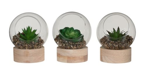 Mica Succulent Plant in Glass on a Wooden Feet